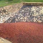BUZIRAGUHINDWA fermentazione
