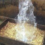 BUZIRAGUHINDWA fermentazione in acqua