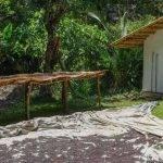 ETIOPIA Torea Village - metodo di lavorazione naturale