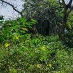 ETIOPIA Torea Village - piantagioni spontanee
