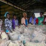 ETIOPIA Torea Village - sacchi di caffè lavorato