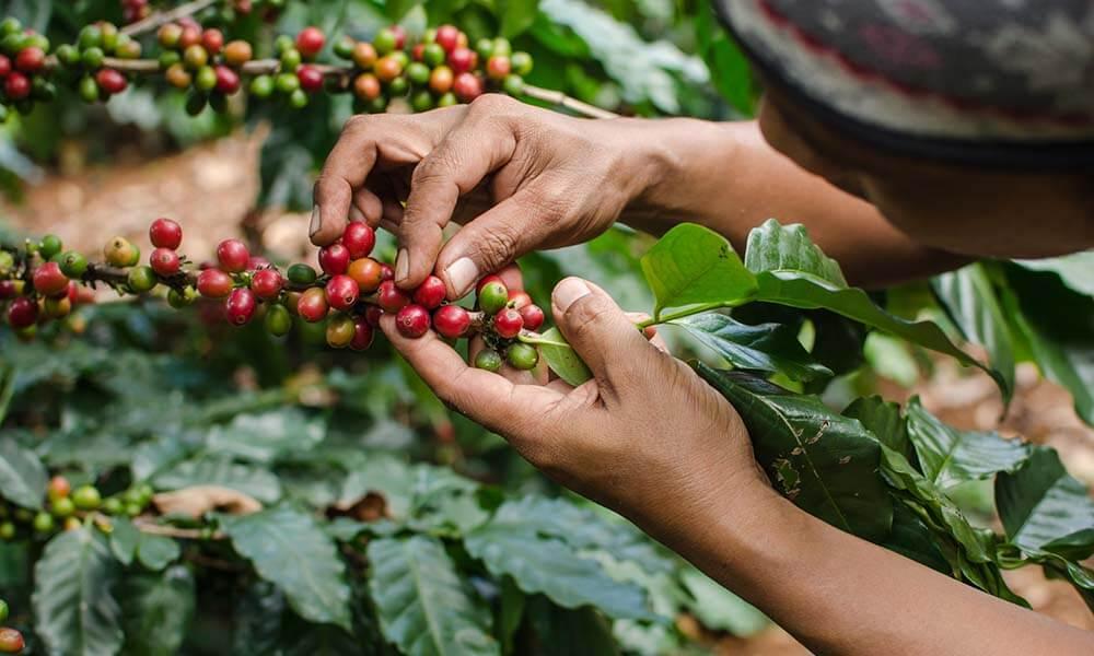storia dei caffè