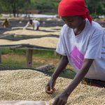 Woman selecting the best coffee beans