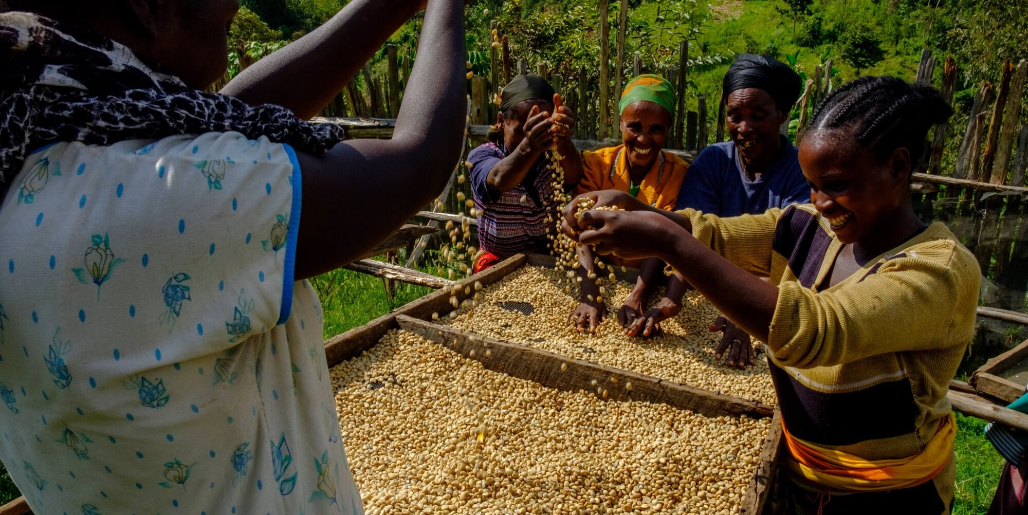Coffee processing in the Ethiopia Damo station