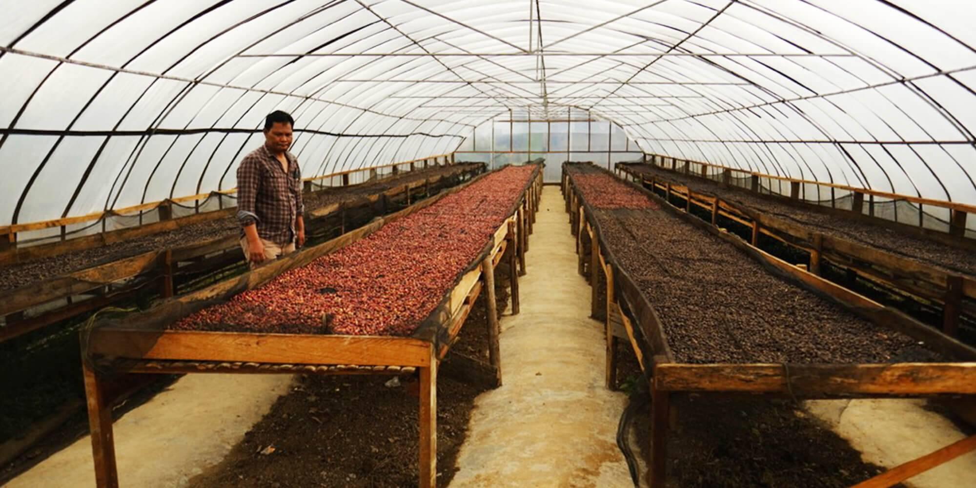 Asman Arianto Coffee processing