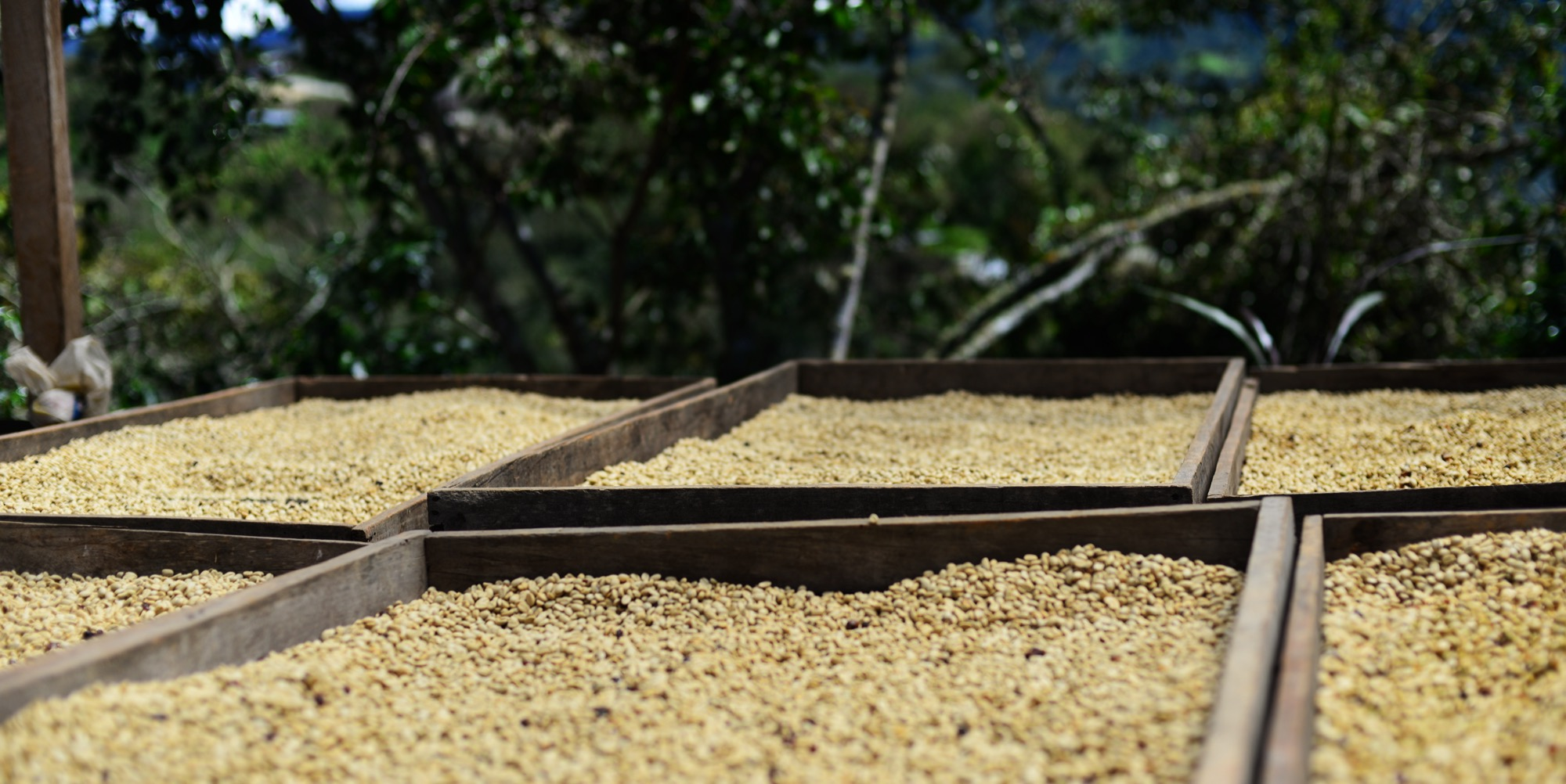 Coffee Processing in Peru