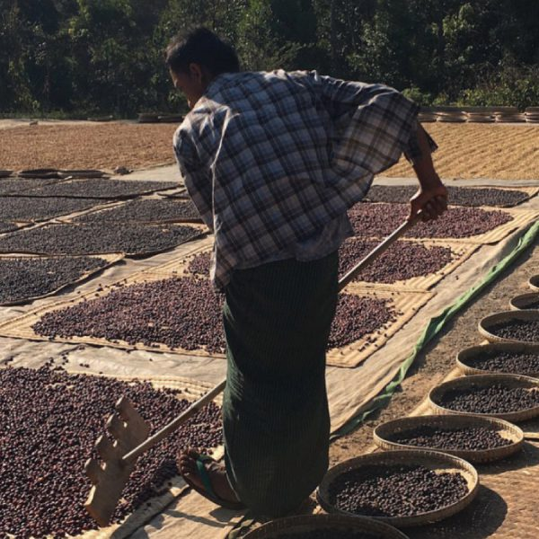 Man from Myanmar processing coffee