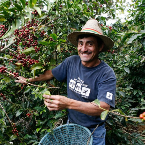 Selecting the best coffees
