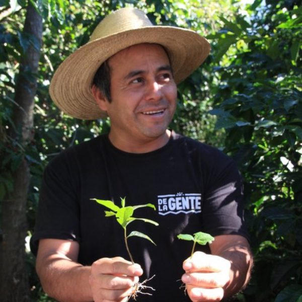 Showing a couple of coffee seedlings